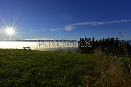 germany allgaeu alpine meadow at backlight