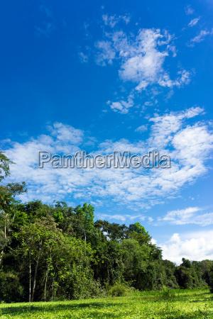 amazon rainforest landscape