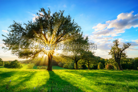 sun shining through a tree in