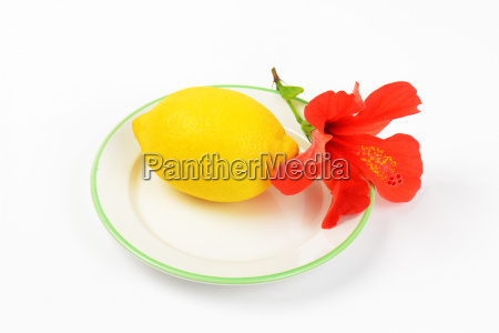 ripe lemon with red hibiscus bloom