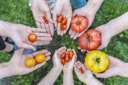 hands of five people holding various