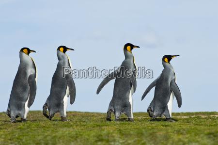 tier vogel horizontal pinguin outdoor freiluft